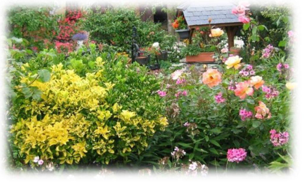 Vente de fleurs, aromates et légumes
